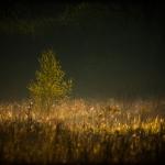 fotografia_przyrodnicza_1