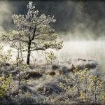 fotografia_przyrodnicza_2