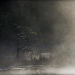 fotografia_przyrody_20