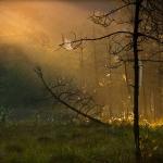 fotografia_przyrody_38