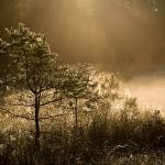fotografia_przyrody_56