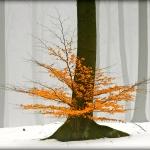 Seasons / Pory roku